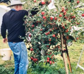 Jack picking apples at home